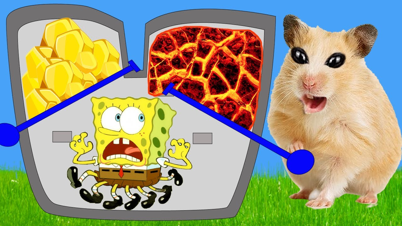 🐹 Hamster & Spongebob Escapes Machine Room Maze Obstacle Course! 🐹 Real Life Hamster