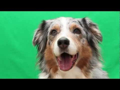 Cute Tricks by Talented Maddie the Dog for Talent Hounds Audition