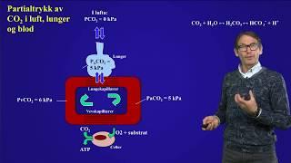 Alveolær ventilasjon og partialtrykk av Co2 i blodet