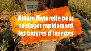 Une astuce pour soulager une piqure d'insectes (guêpe, moustique) et éloigner tiques et puces