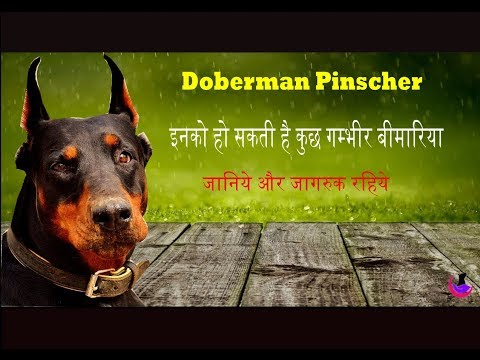 Doberman: Dog Health Problems & Solutions