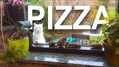 PIZZA - PAROLE DE CHAT