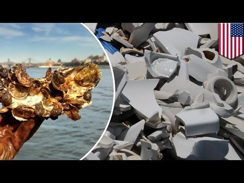 New York to grow 50,000 oysters on recycled toilets to clean up polluted Jamaica Bay - TomoNews