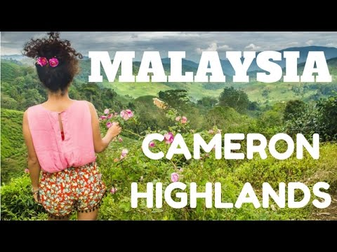 The Cameron Highlands: Malaysia's Cool Mountain Retreat You Can't Afford To Miss