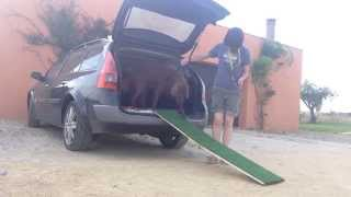 Using A Ramp To Get Your Dog In The Car