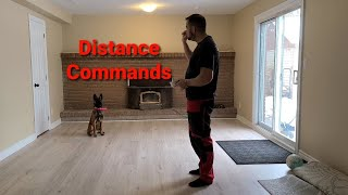How to train your puppy DISTANCE commands