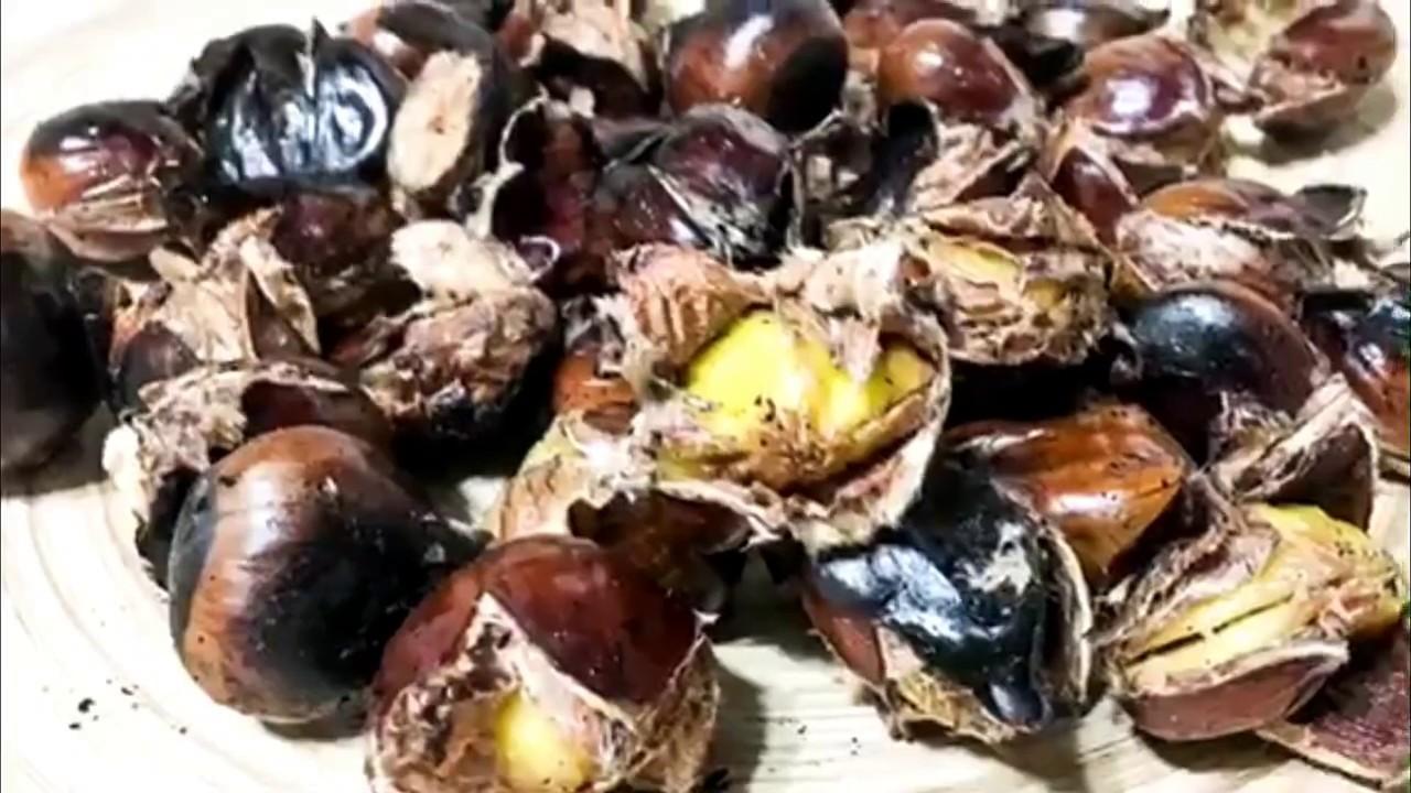 Cum să facem o tinctură de vene varicoase din castan: cele mai bune rețete pentru combaterea bolii