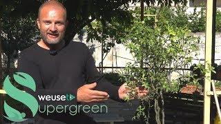Rinvaso agrumi - Come rinvasare gli agrumi -Regole generali per un perfetto invasamento degli agrumi