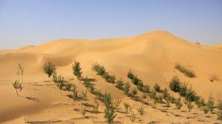 В Китае 67-летняя женщина намерена озеленить пустыню в память о сыне(, 2016-04-03T09:33:47.000Z)