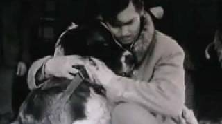 Call of the Wild - 1935 Saint Bernard dog movie
