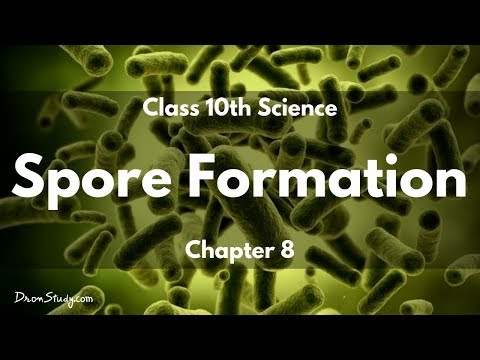 How do Organisms Reproduce - Spore Formation : CBSE Class 10 X Science (Biology)