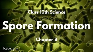 Class 10 Science How do Organisms Reproduce - Spore Formation