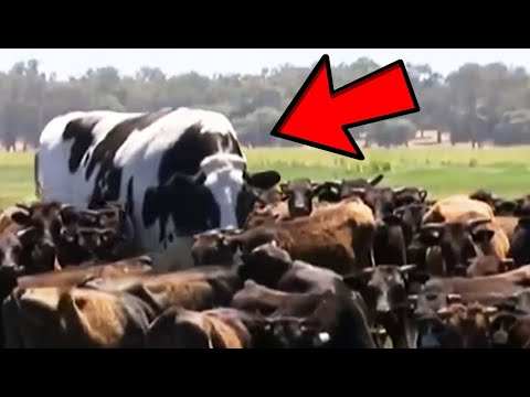 Amazing Videos You Probably Never Saw Before!