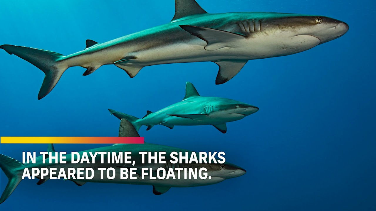 Sharks surf the slope: new paper out in the Journal of Animal Ecology!