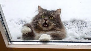 RELIEVE STRESS & LAUGH with the FUNNIEST ANIMALS