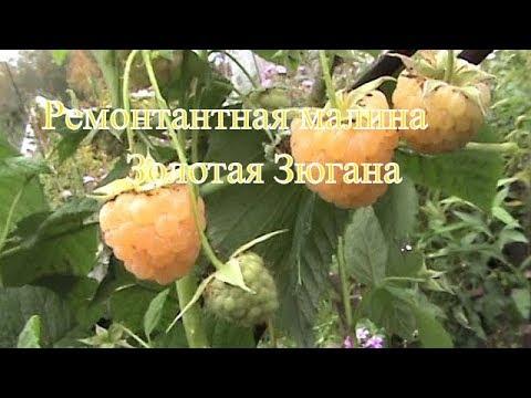 Обрезка малины весной - YouTube