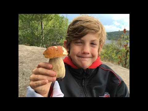 Wild Mushroom Boletus Hunting Central Ontario August 2016