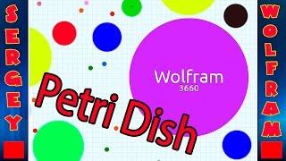 Чашка Петри Игра(Petri dish game)