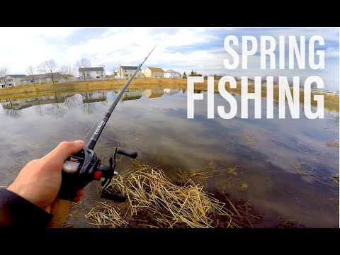 Fishing Grass And Reeds -- Spring Pond Bass