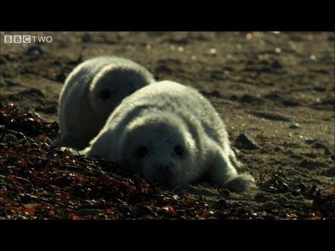 Ewan McGregor duces Hebrides: Islands on the Edge  BBC Two