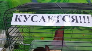 Евуся на выставке кроликов