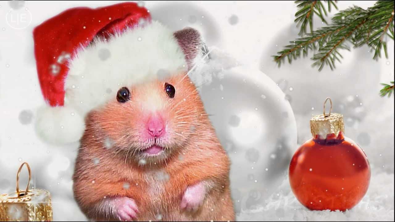 Xmas Cute Wallpaper Hamster Mistletoe Xmas Hamster Chipmunks Chipettes Kids