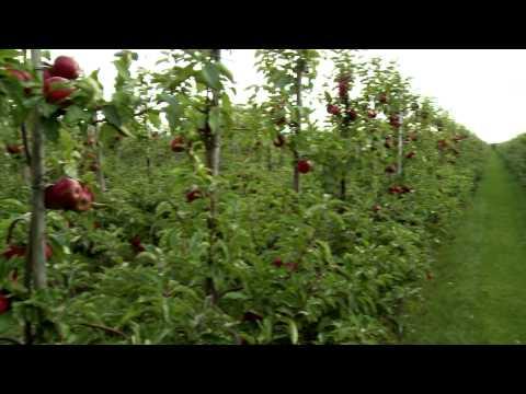 Verse Oogst - Van der Aarde appels & peren
