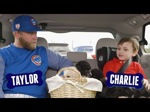 The Morning Rush with Travis Justice and Heather Burnside - DOG DAYS: I-Cubs' Taylor Davis Answers Questions From Puppies