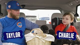 Taylor Davis Answers Questions with Puppies | Cubs and Pups