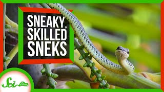 From Hognoses to Spider Tails: 6 Sublime Snakes
