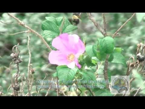 U.S. Forest Service Botanist Jan Schultz: Stop Invasive Species at Wisconsin/Michigan National Parks