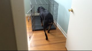 Crate Your Dog: Incredible K9 Quick Tip