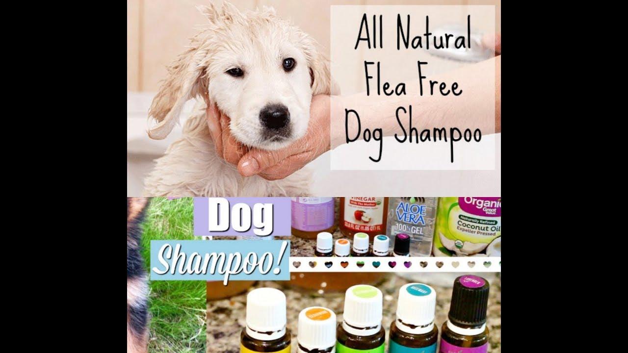 DOGS FLEA SHAMPOO DIY RECIPE | HOMEMADE