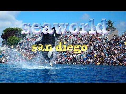 California Travel Destination & Attractions   Visit Sea world San Diego Dolphin Show