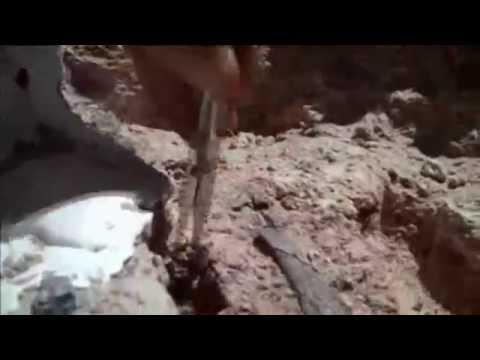 Long-Necked Dinosaur Found In Argentina