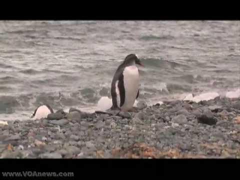 Tourist Arrivals Up in Antarctica