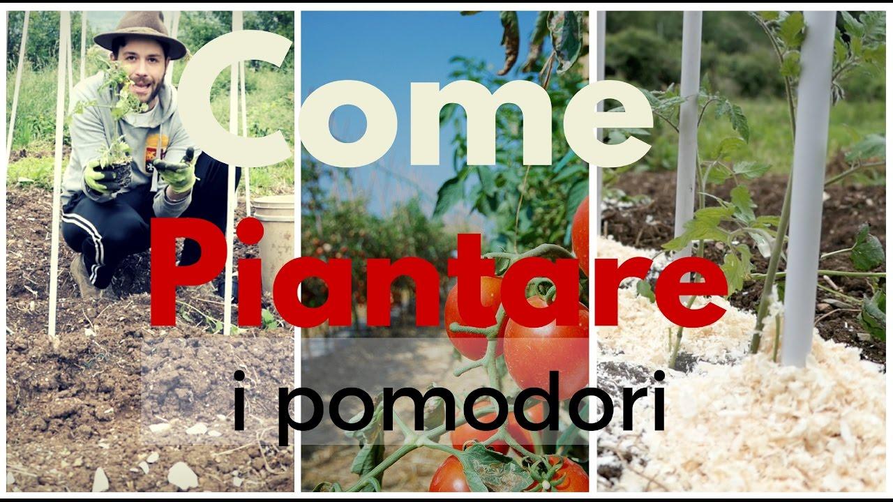 Come piantare i pomodori tutti i trucchi youtube for Piantare pomodori