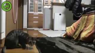 Funny Cat Compilation 2013, The Best Funny Animal Video on the internet Wins & Fails