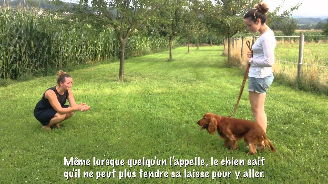 Clarisse Bauwens, chien qui tire avant et après en 15