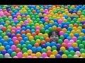 COLOCAMOS 1.000 BOLINHAS NA PISCINA