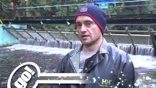 """Shaw TV North: """"Salmon Enhancement In Powell River"""""""