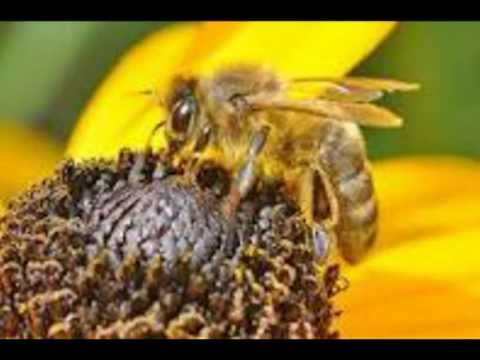 Surah Al-Nahl (The Bees) Sheikh Khalid Al-Jileel