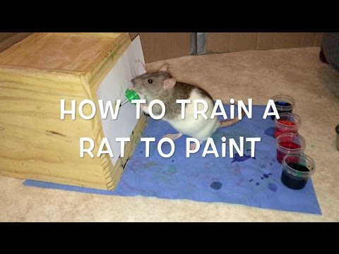 How to Train a Rat to Paint