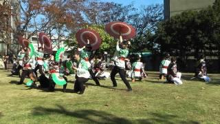 静大祭in浜松2011 お茶ノ子祭々 南中ソーラン