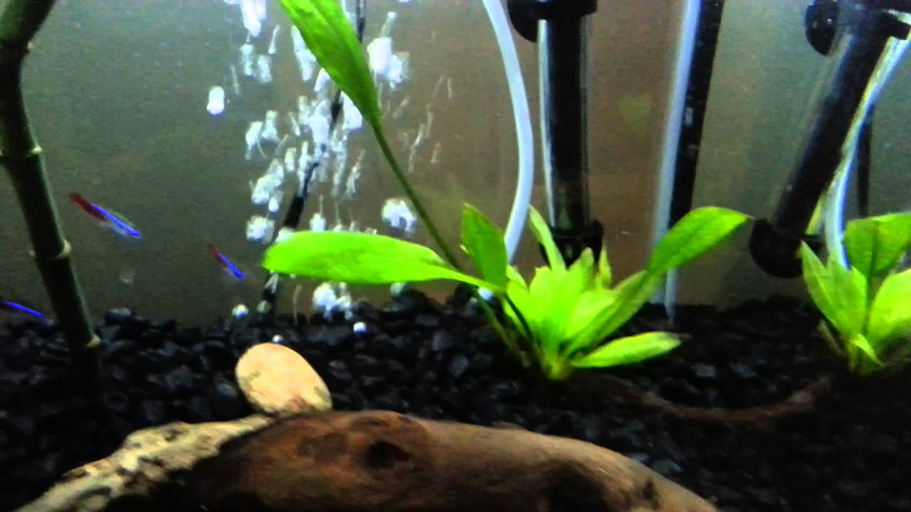 Freshwater aquarium fish keep dying - Fish Keep Dying