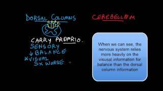 Loss of Balance: Dorsal Columns vs Cerebellum