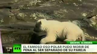 Fallece Knut, el famoso oso polar del zoológico de Berlin