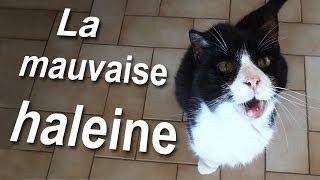 LA MAUVAISE HALEINE - PAROLE DE CHAT