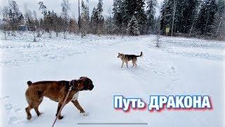 Путь ДРАКОНА Встречи с собаками