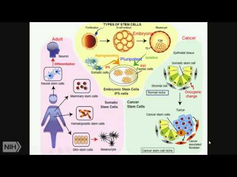 TRACO 2015: Stem Cells - Epigenetics